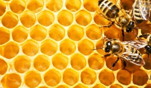 pcheli пчели