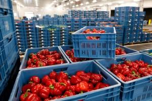 зеленчуци борса