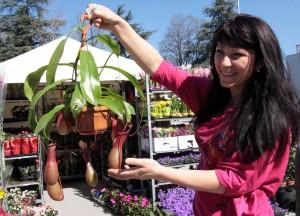 """Традиционни и екзотични цветя, декоративни храсти и овошки ще видят посетителите на """"Цветна пролет 2015"""" от 25 до 29 март в Международен панаир Пловдив."""