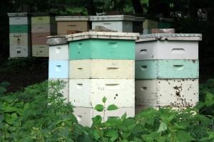 Beehives кошер