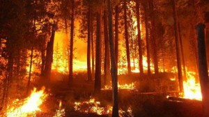 gorski pojar горски пожар