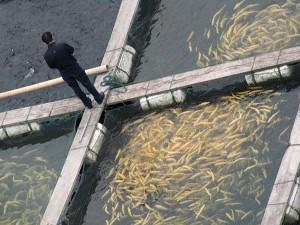 Рибарство1