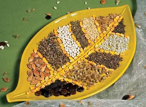 семена semena