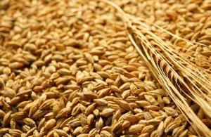 пшеница зърно pshenitsa zarno