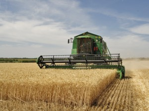 Agriculture_in_Volgograd